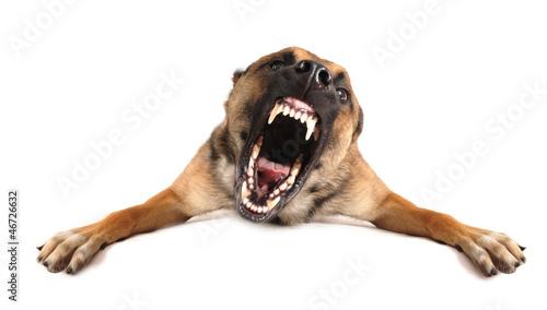 Valokuva  bad dog