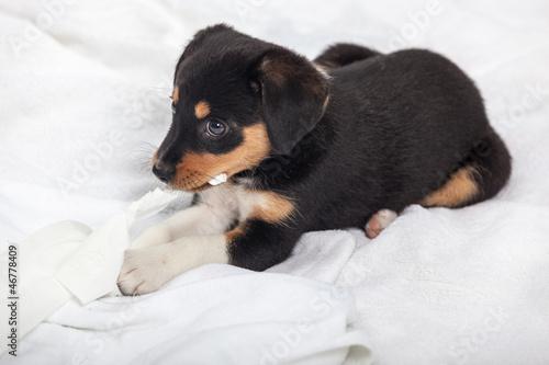 Deurstickers Ontspanning Little Dog on the Bed