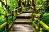 Spaziergang im grünen Dschungel