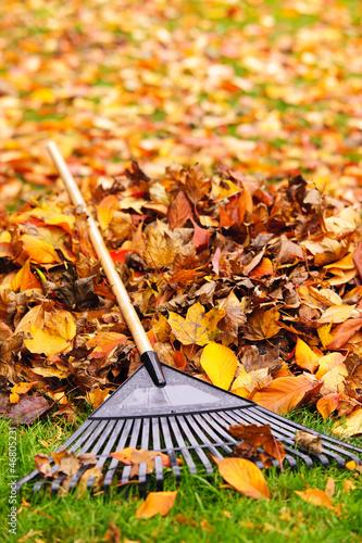 Cuadros en Lienzo Fall leaves with rake