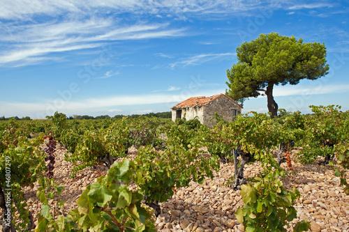 Photo  Vignobles de Provence
