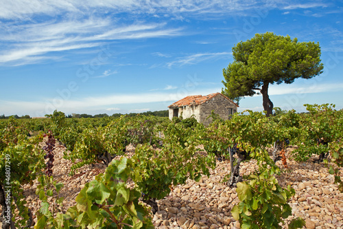Vignobles de Provence Poster