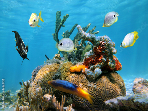 Poster Sous-marin Brain coral with colorful sponges and tropical fish in the Caribbean sea