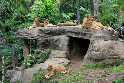 Photo Stands Kangaroo Family of lions