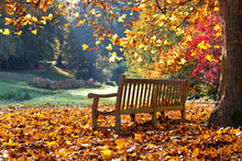 Bench In Autumn Park.