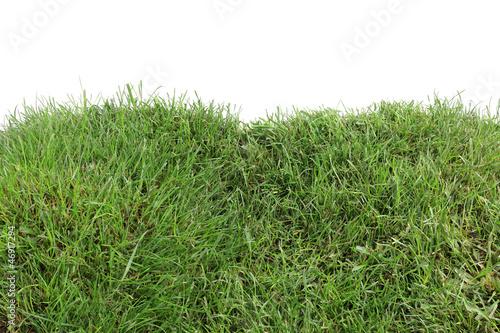 K chenr ckwand aus glas mit foto gras - Kuchenruckwand glas gras ...