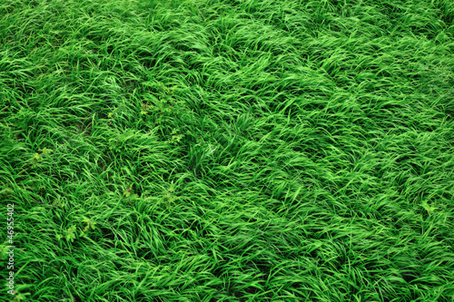 Fotomural grass patern