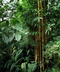 Fototapeta Bambus tropical greenhouse scenery