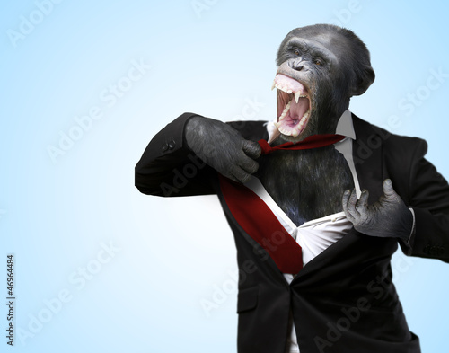 Foto op Plexiglas Aap Annoyed Monkey Shouting