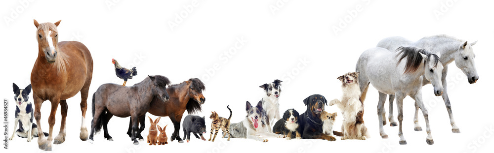 Obraz group of animals fototapeta, plakat