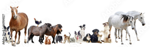 Spoed Foto op Canvas Paarden group of animals