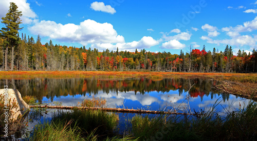 Foto auf AluDibond Kanada Algonquin Provincial Park