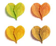 Four Leaf Hearts