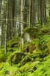 Wald am Krimmler Wasserfall in Österreich