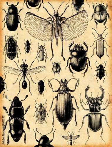 Photo fond insectes rétro