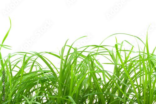 zielone-laka-trawy-na-bialym-tle