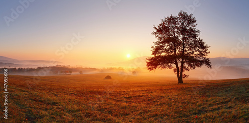 Fotobehang Donkergrijs Alone tree on meadow at sunset with sun and mist - panorama