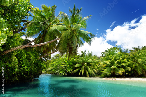 Obraz lake and palms, Mahe island, Seychelles - fototapety do salonu