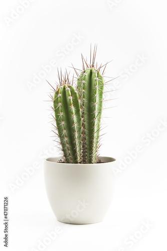 In de dag Cactus cactus en macetero
