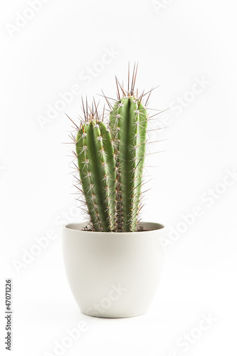 Spoed Foto op Canvas Cactus cactus en macetero