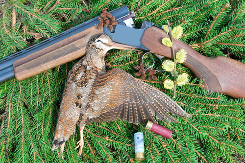 Obraz na plátně Woodcock with hunting attributes