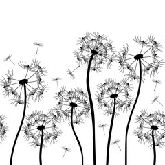 Panel Szklany Dmuchawce vector dandelion