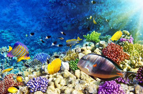 Fototapety, obrazy: Coral and fish in the Red Sea.Egypt