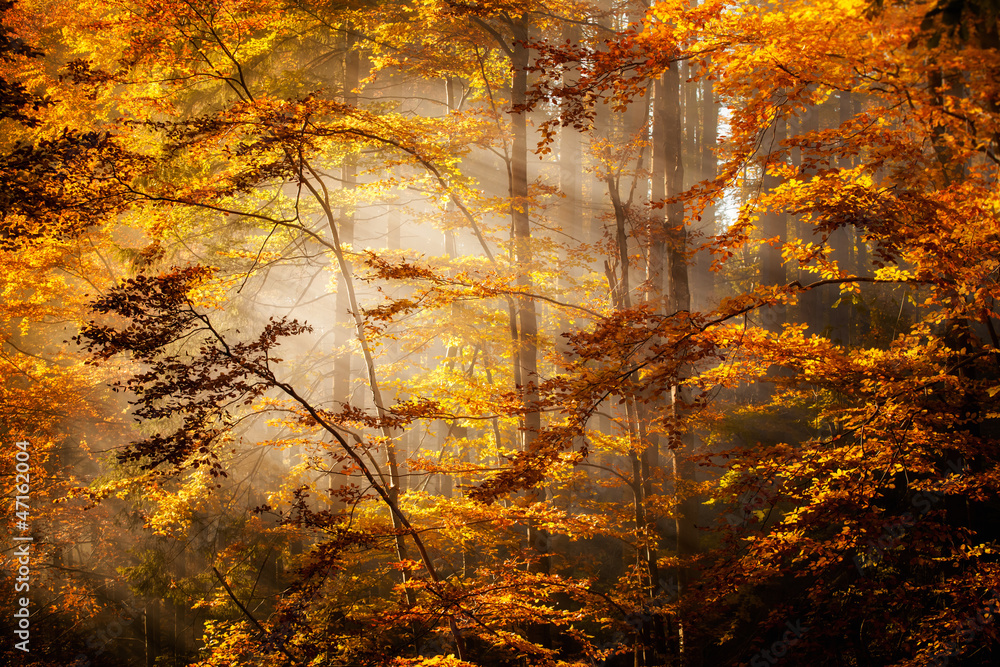 Fototapeta Beautiful autumn woods landscape