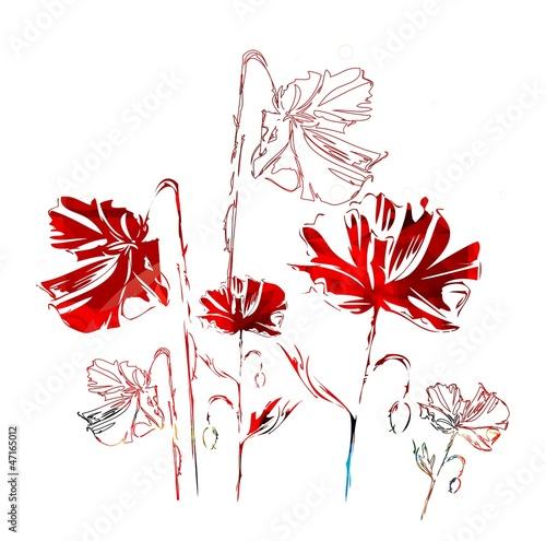 czerwone-maki-na-bialym-tle-grafika-wektorowa
