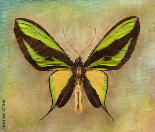 Foto op Aluminium Vlinders in Grunge Vintage background with butterfly