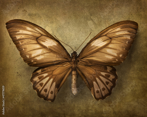 Poster Butterflies in Grunge Vintage background with butterfly