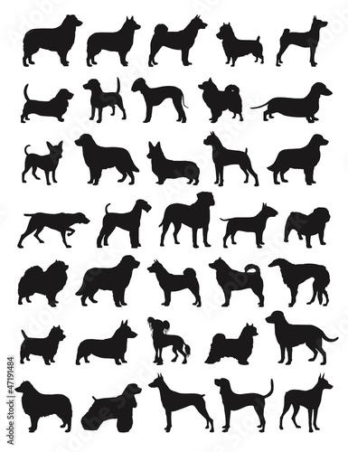 Fotografie, Obraz  Popular dog breeds