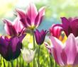 Leinwandbild Motiv Spring beauties