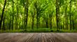 Leinwanddruck Bild - forest trees.