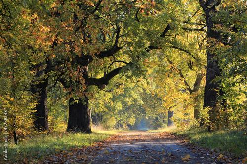 Jesienna Droga - 47258243