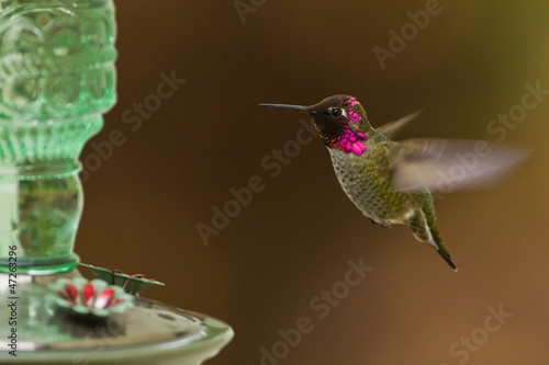 Photo  Side view of hummingbird hovering next to a bird feeder.