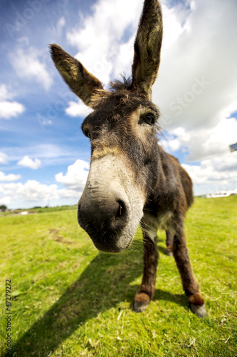 Foto op Canvas Ezel Norfolk Broads, Donkey close up
