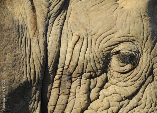 Particolare ravvicinato di elefante Poster