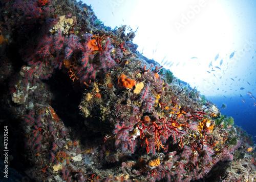 Fototapety, obrazy: corallo rosso subacquea fondale marino
