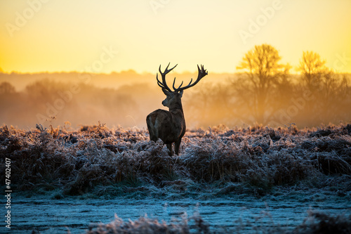 Stampa su Tela Red deer