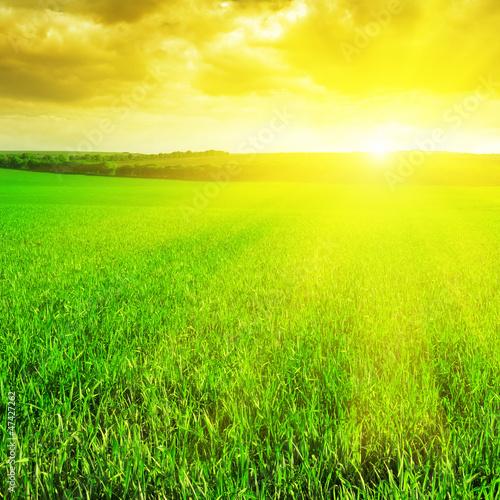 Poster Jaune beautiful sunrise over a wheat field