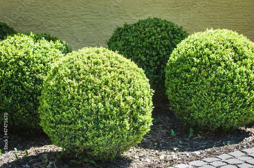 Foto  bushes