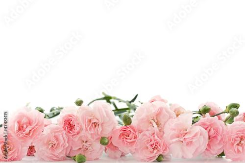 carnation flowers Wallpaper Mural