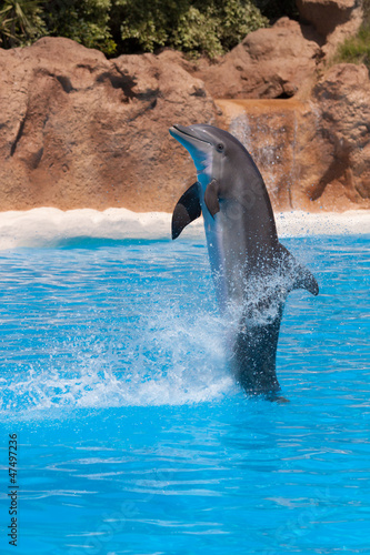 Photo Stands Dolphins Dolphin