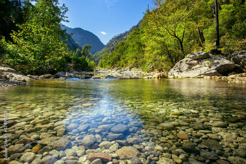 Canvas Prints Forest river Mountain stream