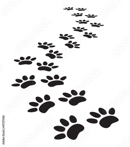 animal paw prints #47517046