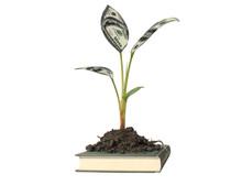 Money Tree On Book