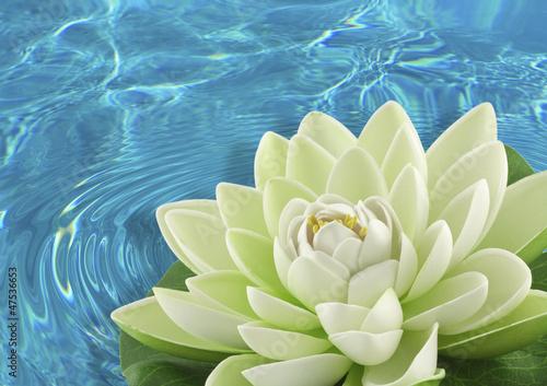 Poster de jardin Nénuphars fleur artificielle nénuphar blanc