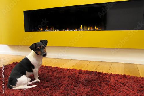 Fotografía  foyer à gaz fermé avec chien