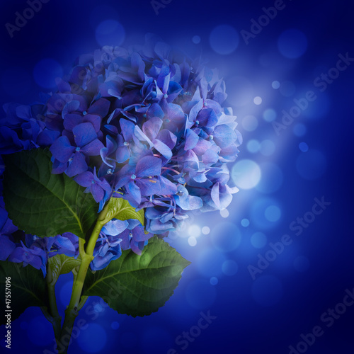 Poster Iris Flowers in a bouquet, blue hydrangeas and white flowers